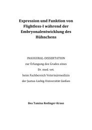 Expression und Funktion von Flightless-I während der ...