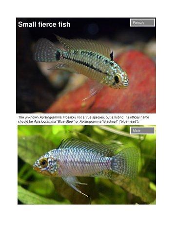 Small fierce fish