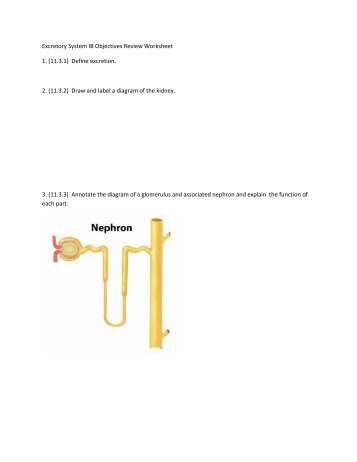 Excretory System IB Objectives Review Worksheet 1. (11.3.1) Define ...