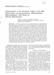 Ultrastructure of the Excretory Tubes of the Mite M aClocheles ...