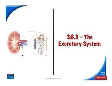 38.3 – The Excretory System - Quia