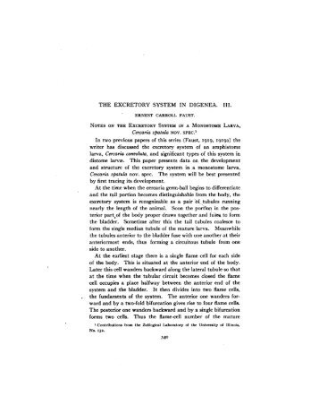 THE EXCRETORY SYSTEM IN DIGENEA. III. Cercaria spatula NOV ...