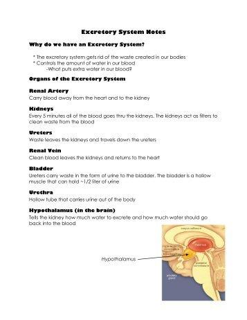 Excretory System Notes.pdf