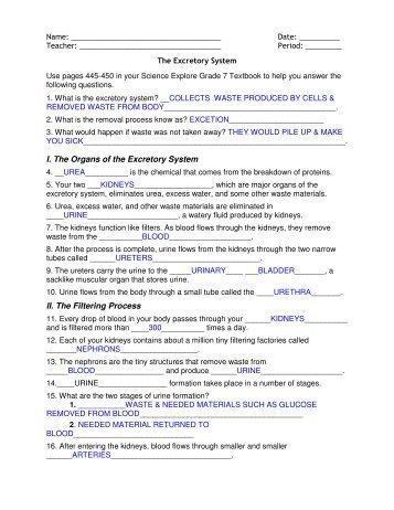 Excretory System Worksheet - Checks Worksheet
