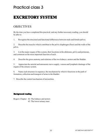 Practical class 3 EXCRETORY SYSTEM
