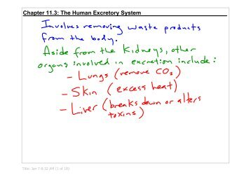 Chapter 11.3: The Human Excretory System