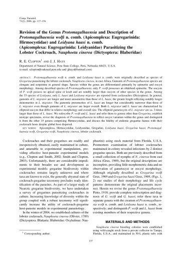 Revision of the Genus Protomagalhaensia and Description ... - BioOne