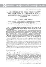 A NEW SPECIES OF THE GENUS ACHERONIOTES LOHAJ ...