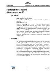 Flat-tailed Horned Lizard (Phrynosoma mcallii) - DRECP