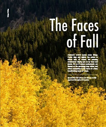 The Faces Of Fall - Bragg Creek