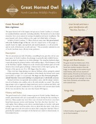 Great Horned Owl - Wildlife Resources Commission