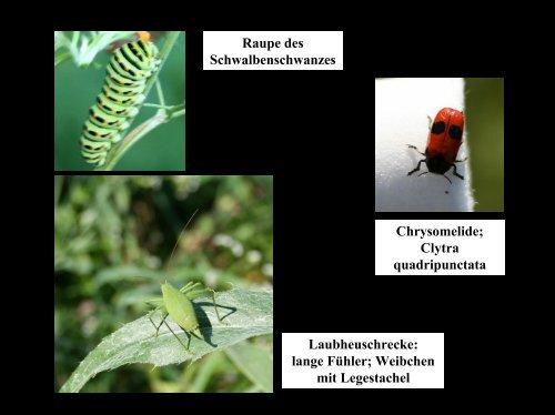 Download - Biologie
