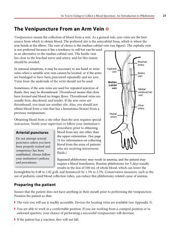 Venipuncture Module 1 Anatomy Of The Arm And Vein Location Aro