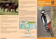Andrew's Wood - Devon Wildlife Trust