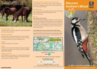 Andrew's Wood - Devon Wildlife Trust