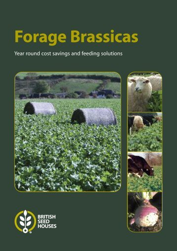 Forage Brassicas - British Seed Houses