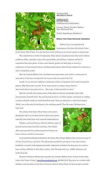 """Cardiospermum halicacabum - Christina Mild's """"Rio Delta Wild"""""""