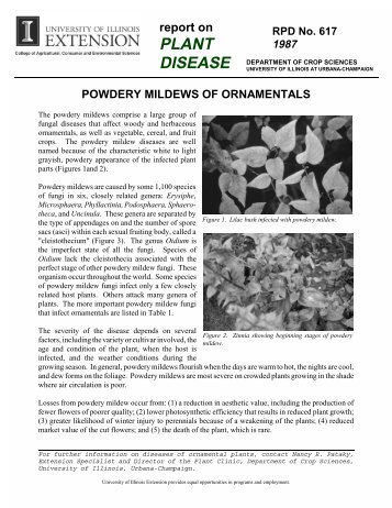 Powdery Mildews of Ornamentals - University of Illinois Extension ...