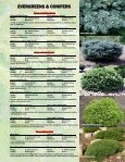 EVERGREENS & CONIFERS - Jeffries Nurseries Ltd. - Page 3