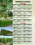 EVERGREENS & CONIFERS - Jeffries Nurseries Ltd. - Page 4