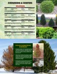 EVERGREENS & CONIFERS - Jeffries Nurseries Ltd. - Page 5