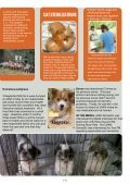 Newsletter JAAN April May June 2011 - Jakarta Animal Aid Network - Page 4