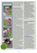 news letter JAAN november 2012 - Jakarta Animal Aid Network - Page 3