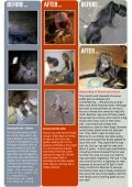 news letter JAAN november 2012 - Jakarta Animal Aid Network - Page 4
