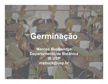 Germinação - Departamento de Botânica - USP