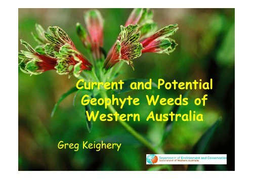 Current and Potential Geophyte Weeds of Western Australia