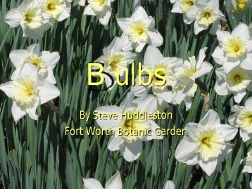 Bulbs (Fullscreen)