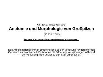 Anatomie und Morphologie von Großpilzen