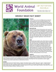 GRIZZLY BEAR FACT SHEET - World Animal Foundation