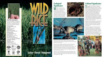 Wild Rice Ecology-Harvest-Management - Great Lakes Indian Fish ...