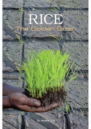 Rice-The Golden Grain - Caritas India