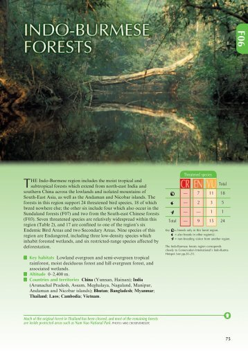 Indo-Burmese forests (PDF, 695 KB) - BirdLife International
