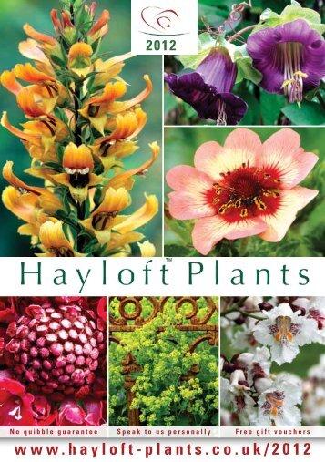 Download the Hayloft 2012 Catalogue - Hayloft Plants