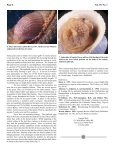 download PDF - Conchologists of America - Page 6