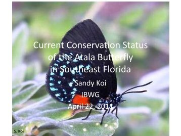 Changing Populations of the Butterfly Eumaeus atala florida in ...
