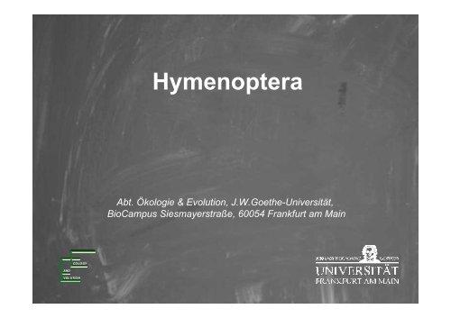 Hymenoptera - Goethe-Universität