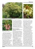 Enkianthus - The Polly Hill Arboretum - Page 2