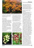 Enkianthus - The Polly Hill Arboretum - Page 4
