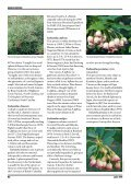 Enkianthus - The Polly Hill Arboretum - Page 5