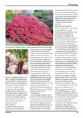 Enkianthus - The Polly Hill Arboretum - Page 6