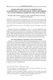 hyperaspis brunnescens dobzhansky - Chebucto Community Net