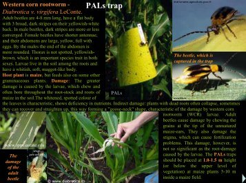 PALs trap - csalomon pheromone traps