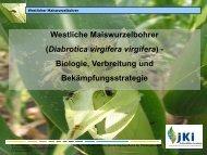 Biologie, Verbreitung und Bekämpfungsstrategie [Download,*.pdf