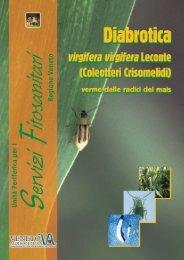 diabrotica 4 f - Veneto Agricoltura