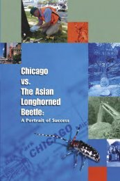 Chicago vs. The Asian longhorned beetle - Northeastern Area ...