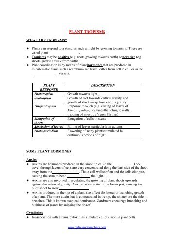Dolch Cloze Worksheets : Cloze activities dolch primer worksheet